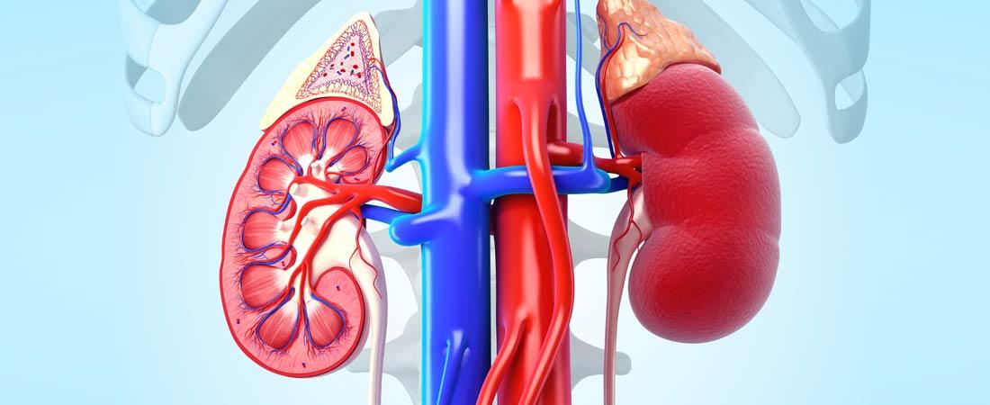 kidney disease / failure