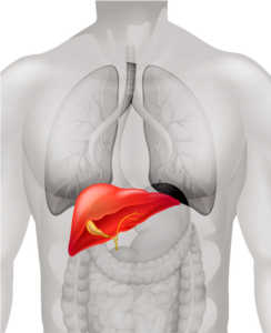 Philadelphia Liver Injury / Liver Failure Lawyers